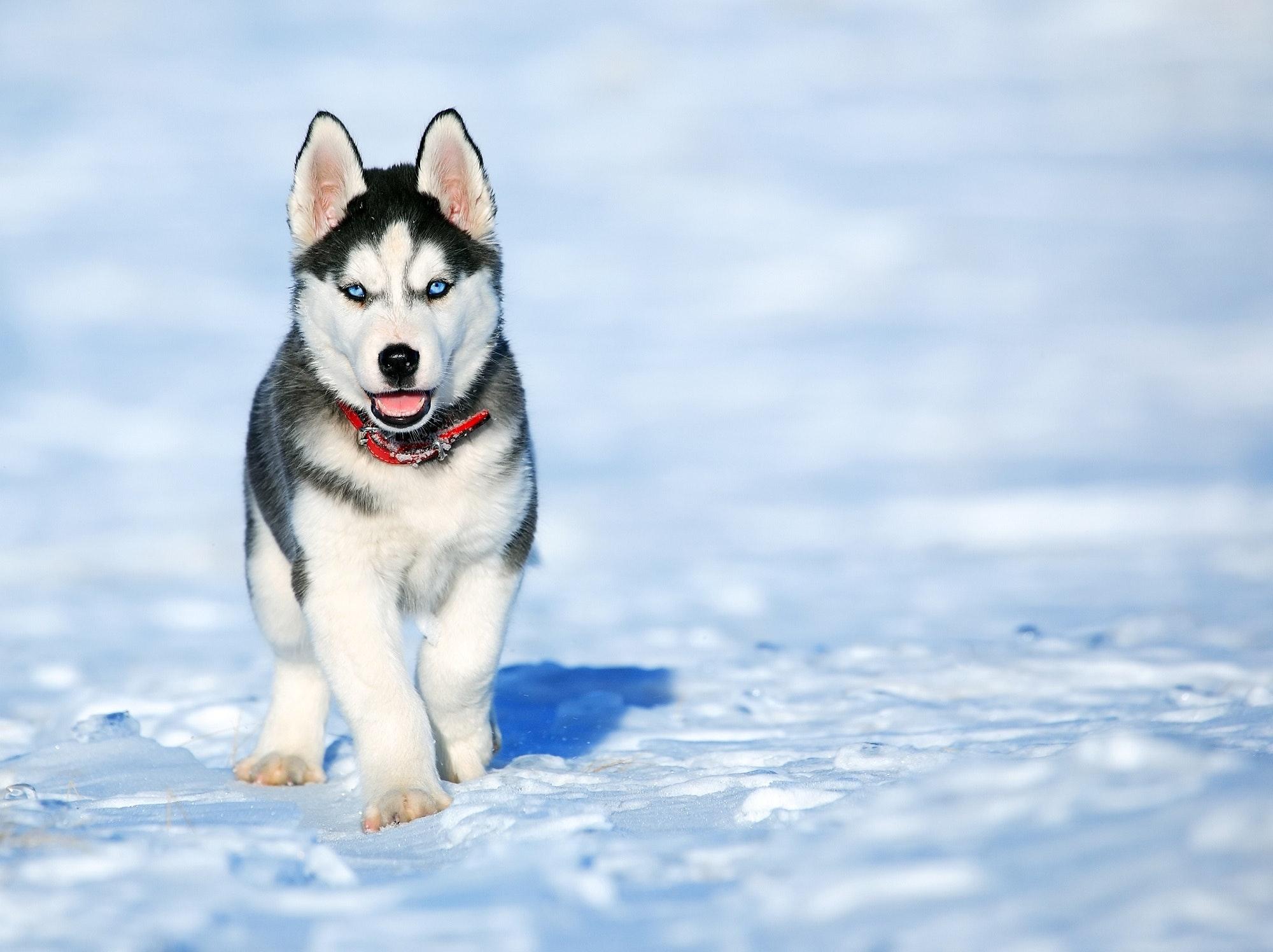 En hund i snøen